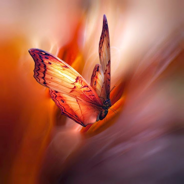 butterfly flight