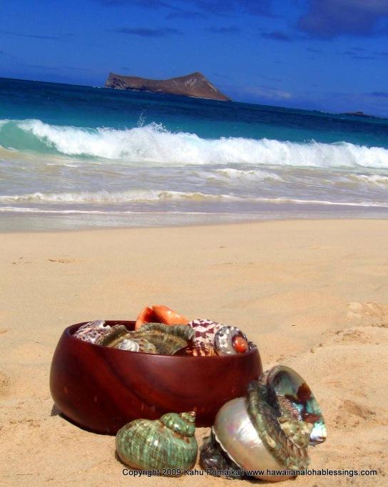 koa bowl and shells