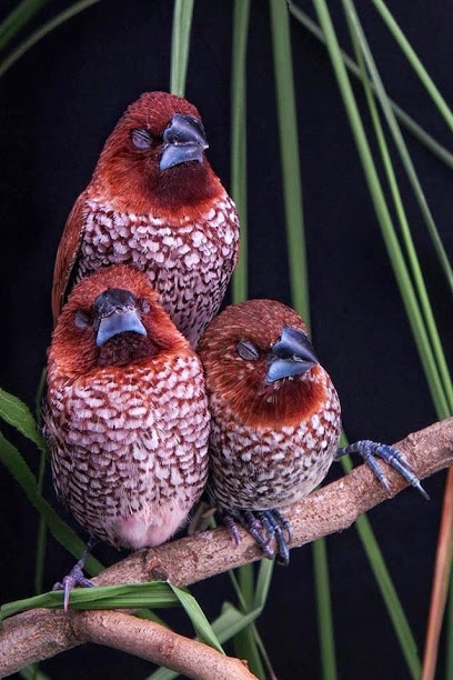 3 sleeping birds
