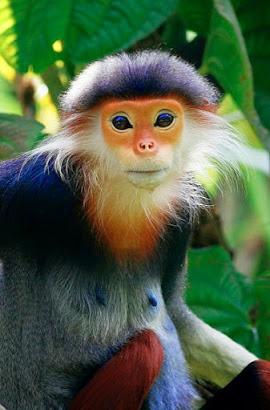 focused monkey