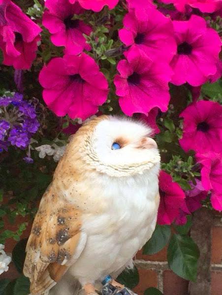 owl admiring flowers