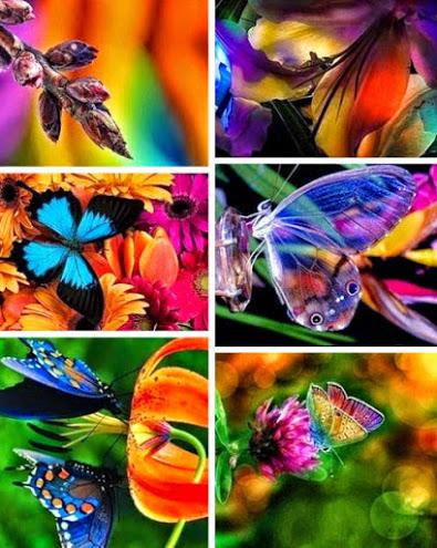 rainbows nature