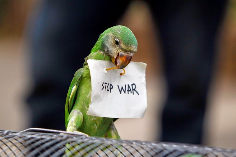 stop war parrot