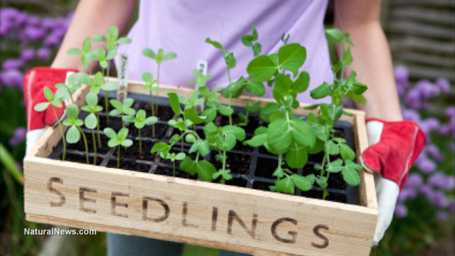 Woman-Garden-Farm-Seedlings-Soil-Plants