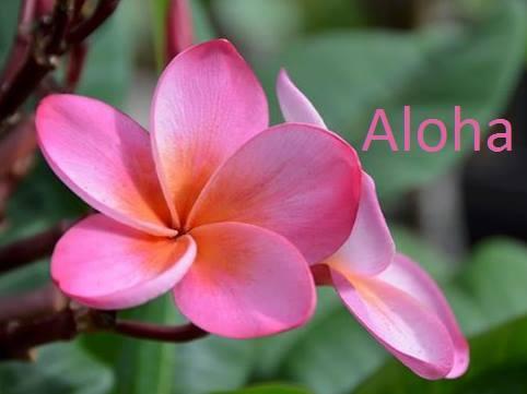 aloha plumeria