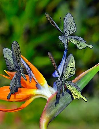 bird paradise butterflies