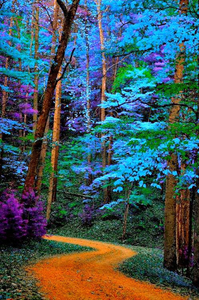 Blue Trees Path, Great Smoky Mountains National Park, Tennessee