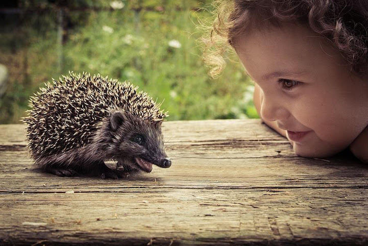 child stare hedgehog