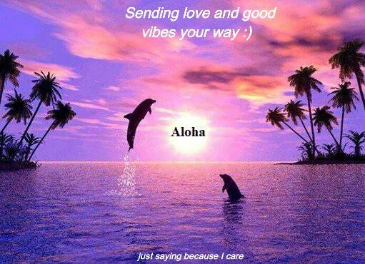 dolphin aloha