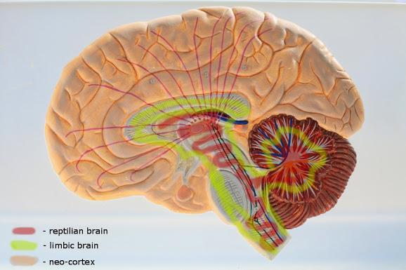 triune-brain-simona-rich