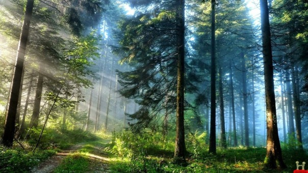 awesome-forest-natural-beautiful-hd-wallpapers-wallpaper-nature-beauty-dark-backgrounds-amazing-apartments-minneapolis-the-rainforest-pictures-awesome-126546048
