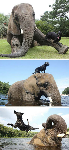 elephant dog friends