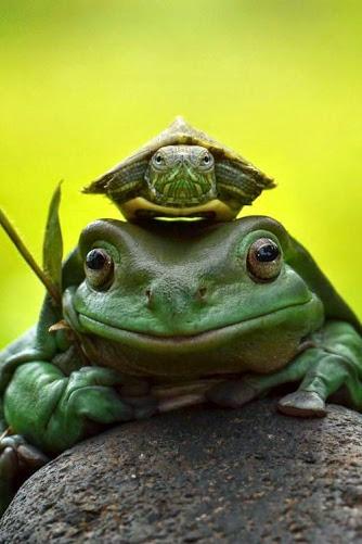 frog turtle