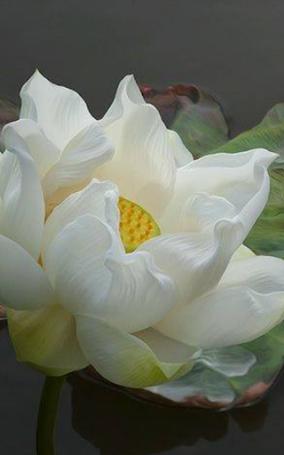 full white lotus