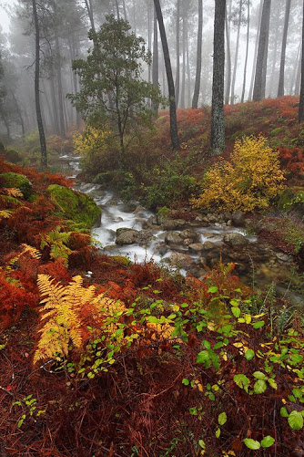 Misty Forest, Basque Country, Spain