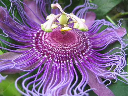 tropical purple flower