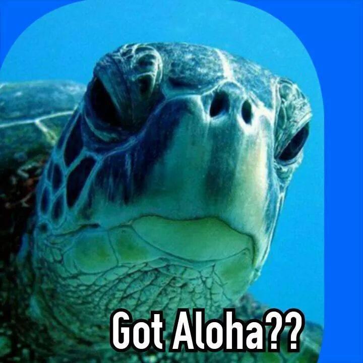 Ka Honu ~ Sea Turtle