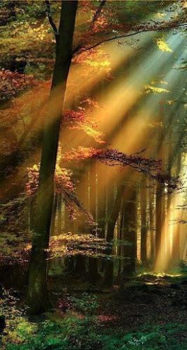 light thru trees