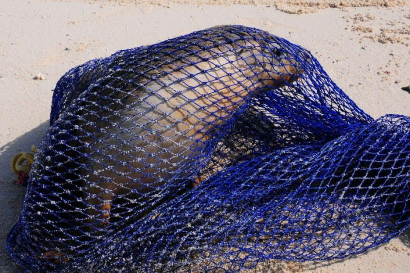 netted seal