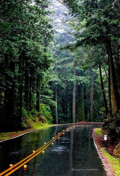 PNW Roadway