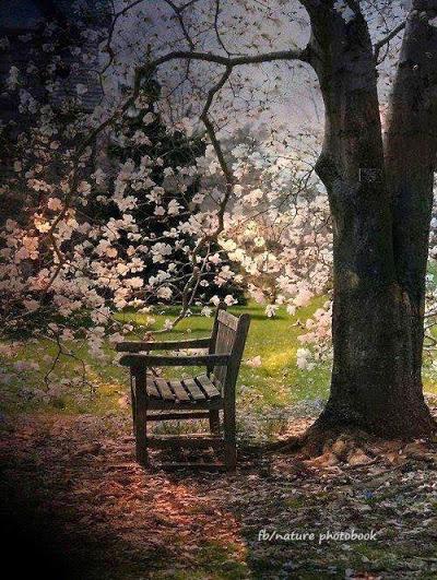 treeside bench