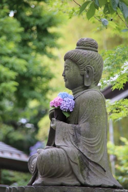 buddha_hydragnea