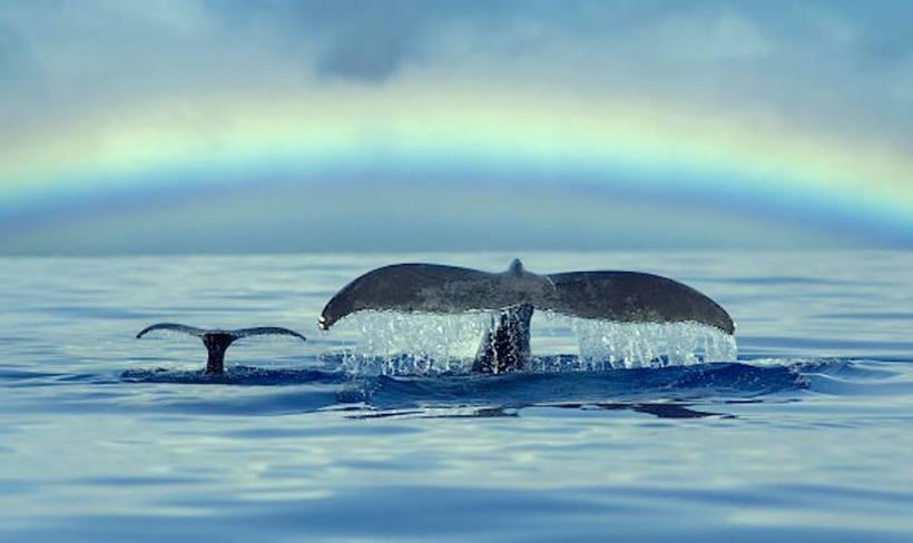 double whale flukes