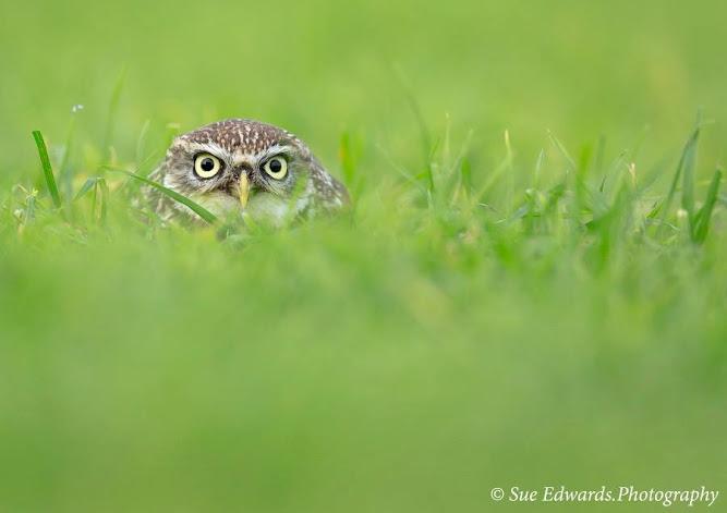 Peak-a-boo by Sue Edwards via http-_buff.ly_1G87PYH #500px