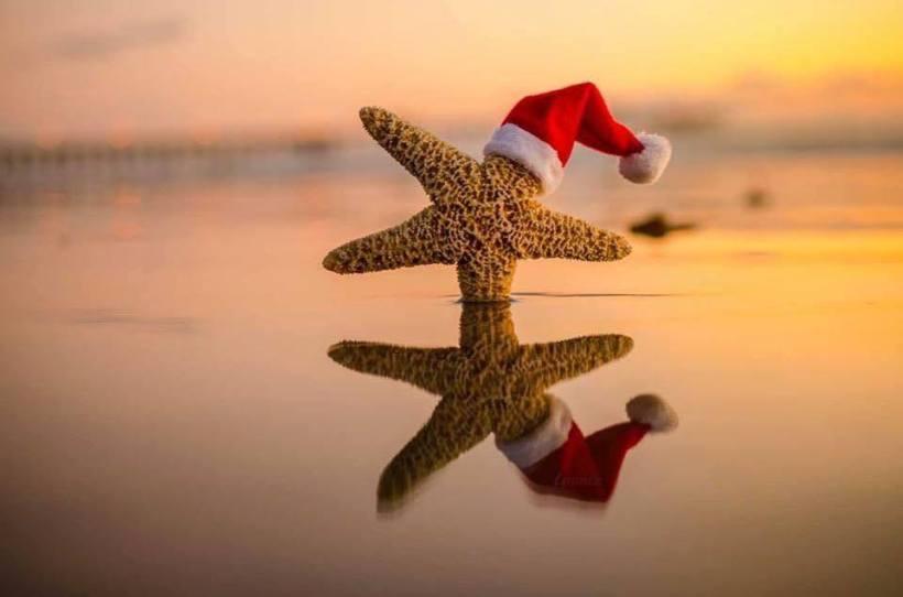 santa_starfish