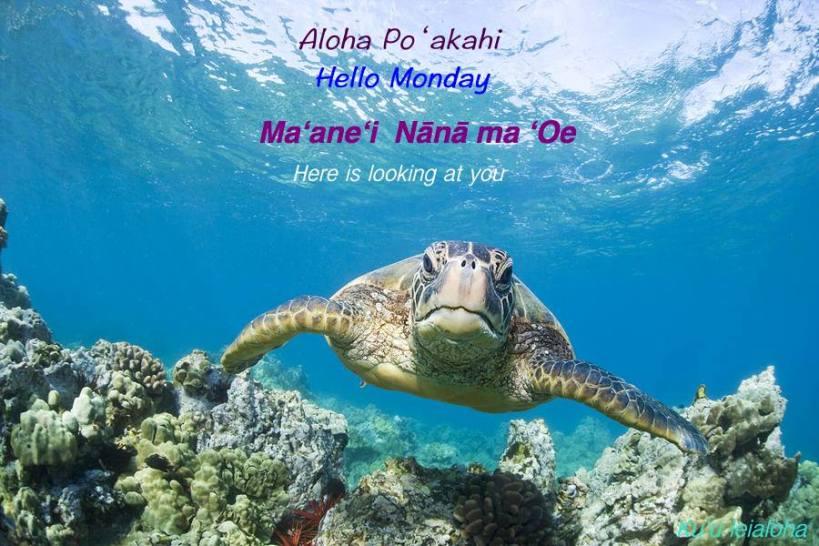 aloha_honu3