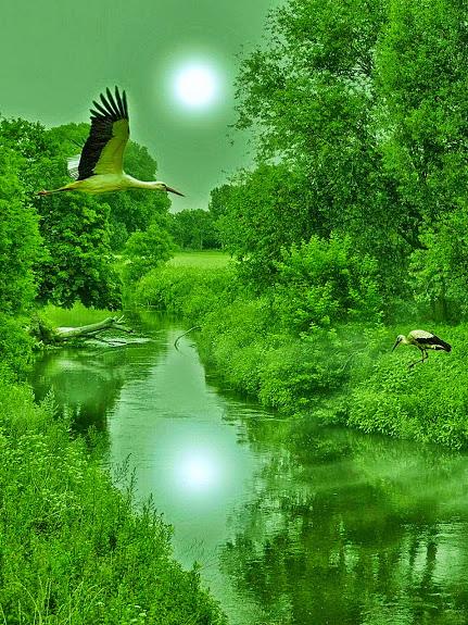 cranes_emerald stream