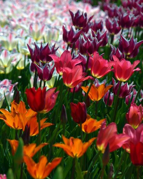 flowers_spring
