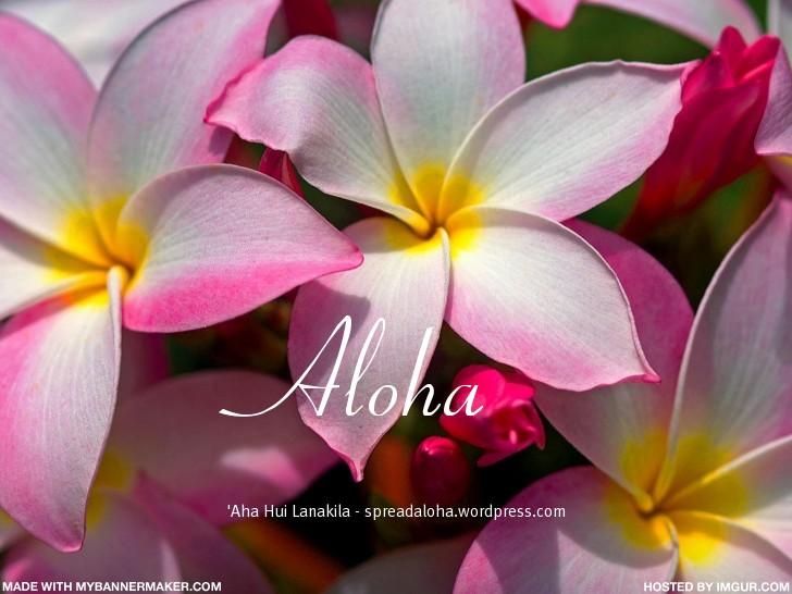 aloha_AHL_pinkplumies