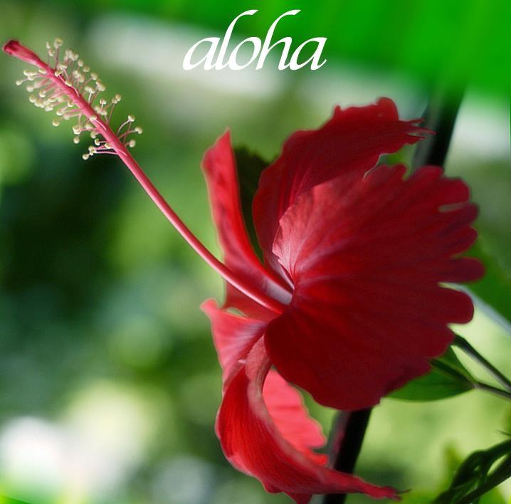 aloha_long_hibiscus