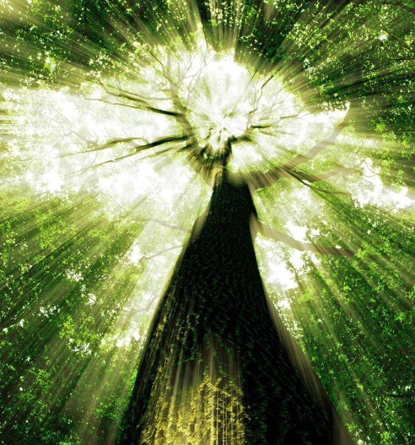 matrix tree