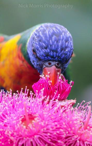 parrots_Rainbow macro