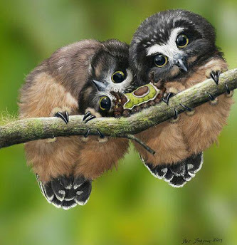 2_owls_Caterpiller
