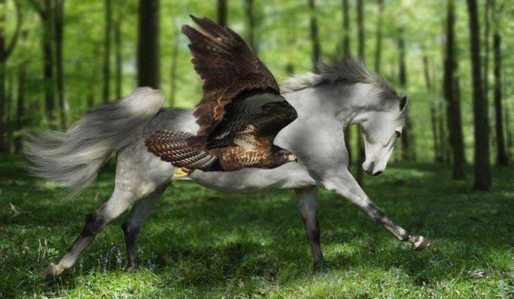 falcon_white horse