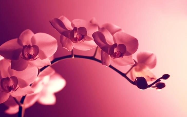 orchids_salmon study