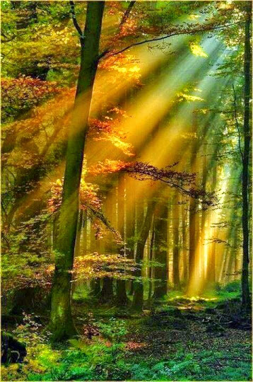 sunrays_123forest
