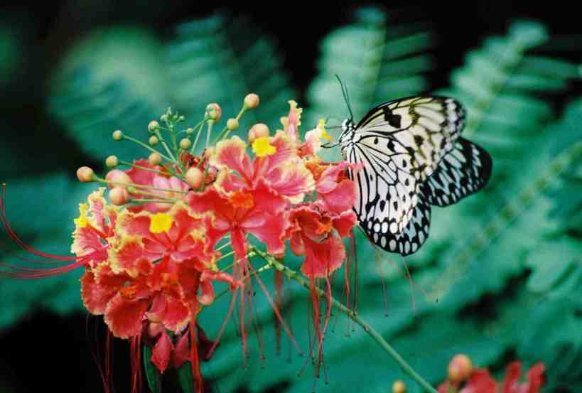 tropical flower butterfly