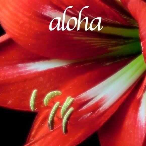 aloha_hibiscus_red_macro