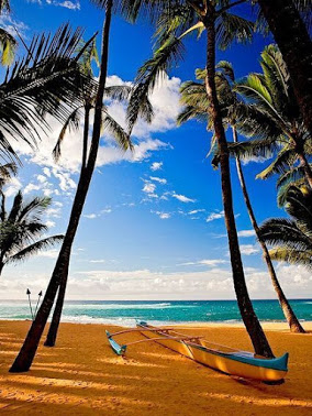 beach_maui_hawaii