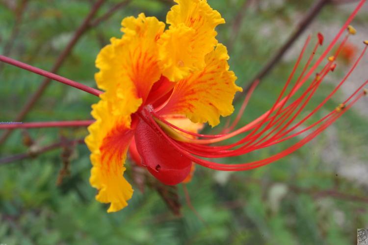 exotic-flower-4