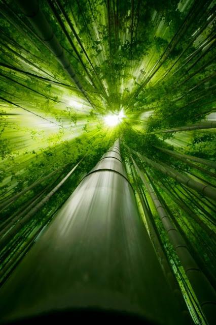 bamboo_sunlight