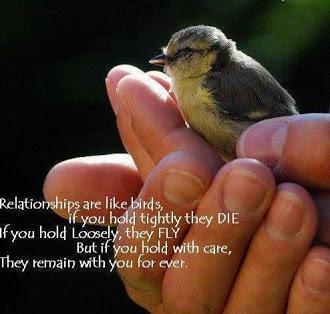 birds_relate