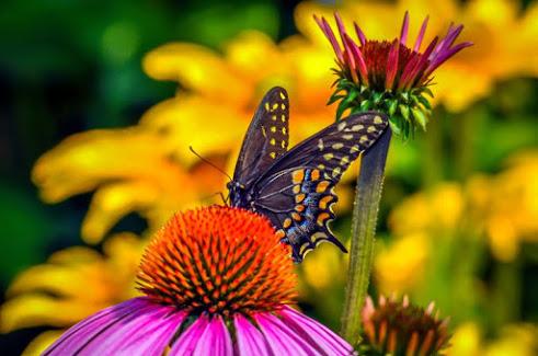 flowers_butterfly5