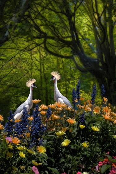 cranes_flower_garden