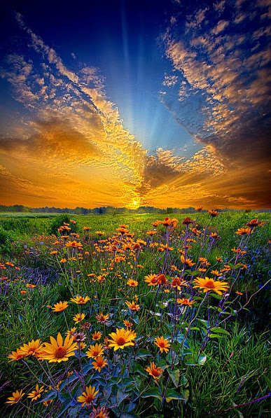 daisy-dream-phil-koch