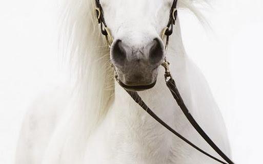 horse_white_reins